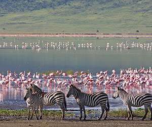 Kenya Safari special offers with Sunway