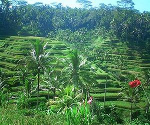 Ubud Bali Holidays 2018 Sunway Ie