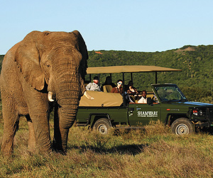 Cape Town & Winelands Accommodation - Shamwari Private Game Reserve - Sunway.ie