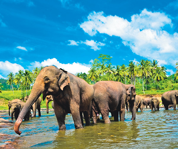 Book your Sri Lanka Holiday with Sunway