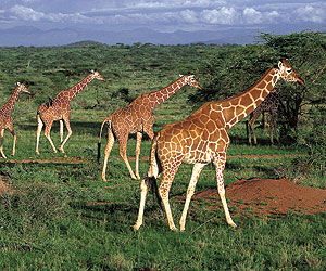 Book your Kenya Safari Holiday with Sunway