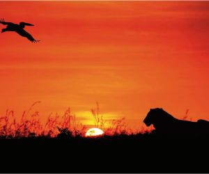 Choose Sunway for your Kenya Safari Holiday