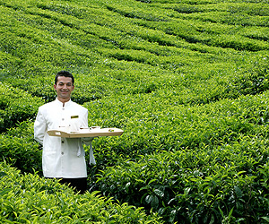 Book your Cameron Highlands Holiday with Sunway
