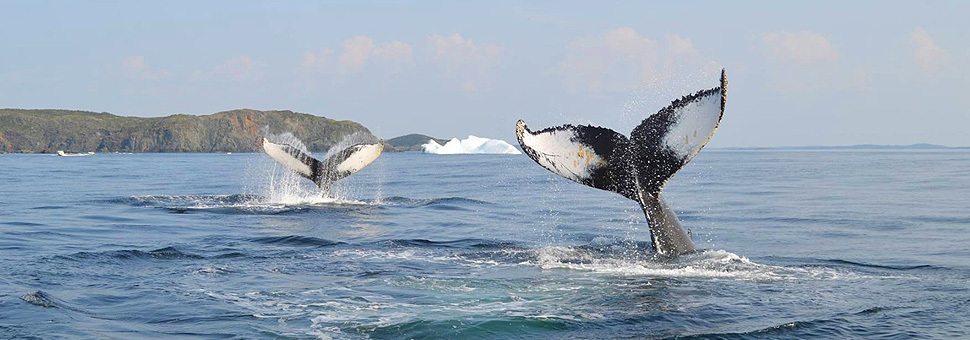 Whales, Bergs & Birds Tour Holidays with Sunway