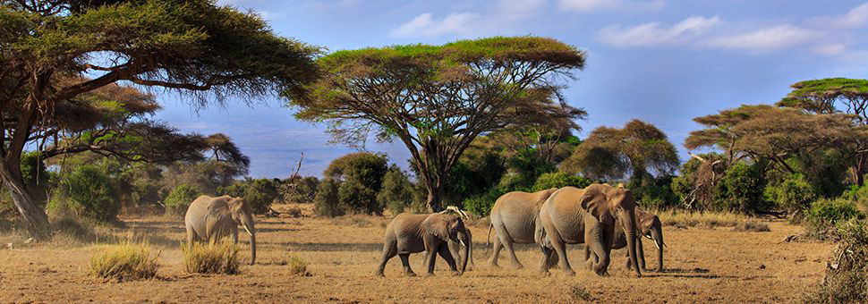 Sunway offer holidays to Kenya Safari, Kenya