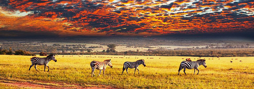 Sunway offer holidays to Safari Lodges, South Africa