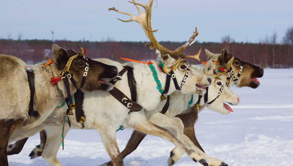 Visit Santa in Lapland 2019 Holidays to Lapland direct