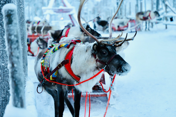 Stay in Levi on Sunway's Three Night Lapland Trip